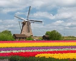 """Résultat de recherche d'images pour """"gifs de tulipes de hollande"""""""