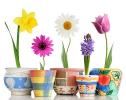 Image result for spring flowers images
