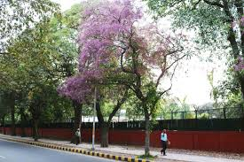 city nature blue trees maharshi raman road the delhi walla city nature blue trees maharshi raman road