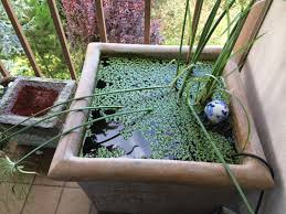 diy patio pond: patio container water garden ideas home decorating ideas pond small patio ideas organicoyenforma