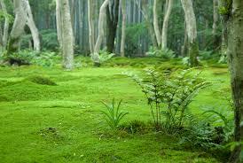 Image result for fern moss