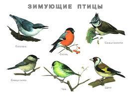 Зимующие птицы. Картинки, стихи и вопросы к мероприятию ...