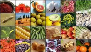 نتیجه تصویری برای محصولات کشاورزی