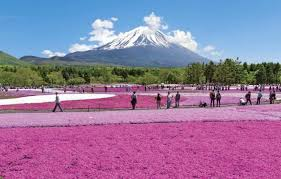 10 Great Places To View Spring <b>Flowers Around</b> Japan | MATCHA ...