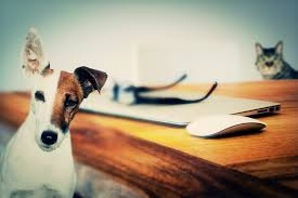 similarities between cats and dogs essay  similarities between cats and dogs essay