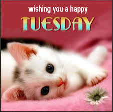 Wishing you a happy Tuesday, day greeting, kitten, cat | Tuesday ...