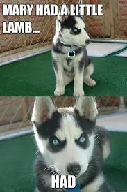 Husky puppie memes (10 pics) - Husky Lovers via Relatably.com