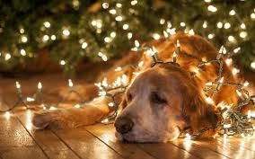 Image result for Christmas Dog