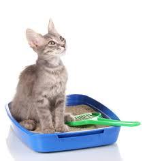 five common cat litter box mistakes cat litter box