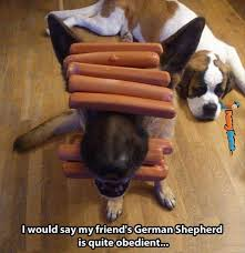 Animal memes - German shepherd is quite obedient | FunnyMeme.com via Relatably.com