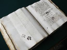 Curious <b>Cat</b> Walks Over Medieval Manuscript