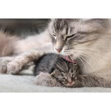 """Résultat de recherche d'images pour """"images chats"""""""