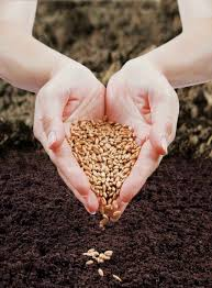 essay on the importance of seed industry in agriculture