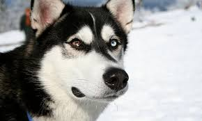 كلاب بوليسية شرسة كلاب مدربة