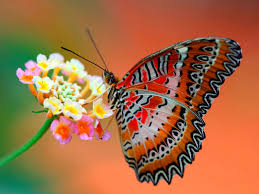 Image result for picture of butterfly