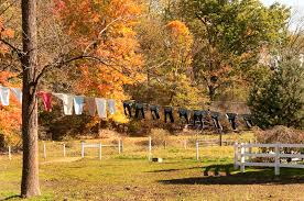 dutchman news just another wordpress com weblog is leaf peeping time again in ohio s amish country and part of the fun is losing yourself in the vibrant fall colors and quaint sights of the area