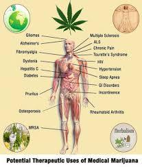human anatomy essays cannabis essay essay help