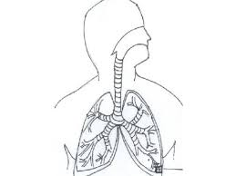 respiratory system lungs coloring pages google twit respiratory system clipart kid