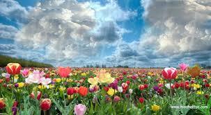 """Résultat de recherche d'images pour """"champs au printemps"""""""