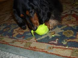 the tennis ball a story com picture