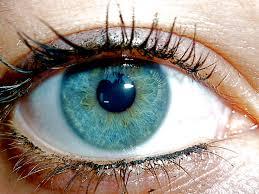 Bildresultat för light blue eyes