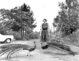 flannery o connor archives the paris review the paris review joe mctyre atlanta constitution flannery o connor in the driveway at andalusia