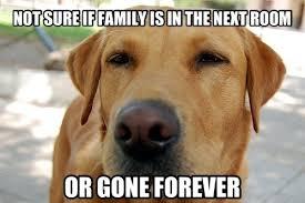 Memes Vault Good Guy Dog Memes via Relatably.com
