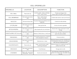 best ideas about science cells cell parts human i thought this was a good post about cells we have been learning about the anatomy of a cell and we have an essay question about it
