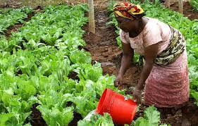 """Résultat de recherche d'images pour """"images des terres cultivables d'afrique"""""""