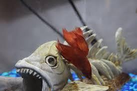 Pet Supplies AA Betta <b>O Girl</b> Aquariums Aquariums
