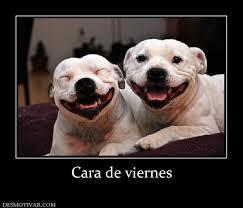 Hoy dedico una sonrisa, ....... Images?q=tbn:ANd9GcSazy_BAo0Kl6AqZpjS7K01NAVnurpubNcqUm3fdY4RZGFFu7nd