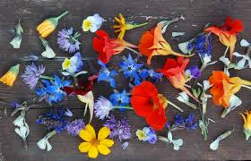 Image result for edible flowers australia