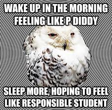 Slightly Studious Owl memes | quickmeme via Relatably.com