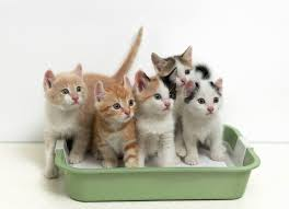 Image result for cats litter box