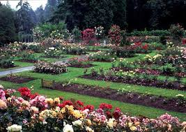Image result for rose garden portland flower