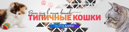 Типичные <b>кошки</b>™ | ВКонтакте