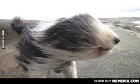It's a bit windy in the UK today. - MemePix via Relatably.com