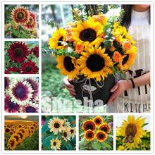 Best value <b>Sunflower</b> Plants Sale – Great deals on <b>Sunflower</b> Plants ...