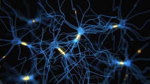 Treating Gut Disease with <b>Electrostimulation</b> - Johns Hopkins ...