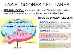 Resultado de imagen para funcionescelulares