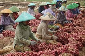 Komoditas Bawang Jateng: Masih Perlukah Impor?