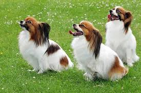 Οι πεταλούδες - σκύλοι....Του Μ. Σαχτούρη...