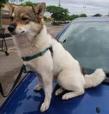 Is This Your <b>Dog</b>?- <b>Saint</b> Paul- <b>Unknown</b> Breed- <b>Unknown</b> Gender ...