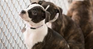 Landmark California Pet Store Ban Treats <b>Animals</b> as Pets, <b>Not</b> ...