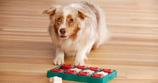 The 5 Best Toys For <b>Smart Dogs</b>