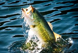 How to Setup and Use a <b>Spinning</b> Rod and <b>Reel</b>: 10 Steps