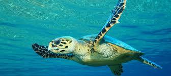 Islas Marietas Images?q=tbn:ANd9GcScWDgkLnTU27CTJEnU2ofCFjg2-6Z7yqnIHT_jMdDWawwNHq40