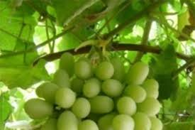 s organic fruit whole foods market grapes integrity