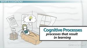 characteristics of learning styles video lesson transcript cognitive processes in learning types definition examples