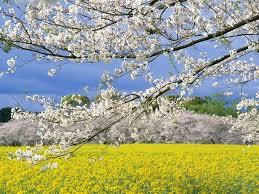 Картинки по запросу весна 2016 сельхоз картинки